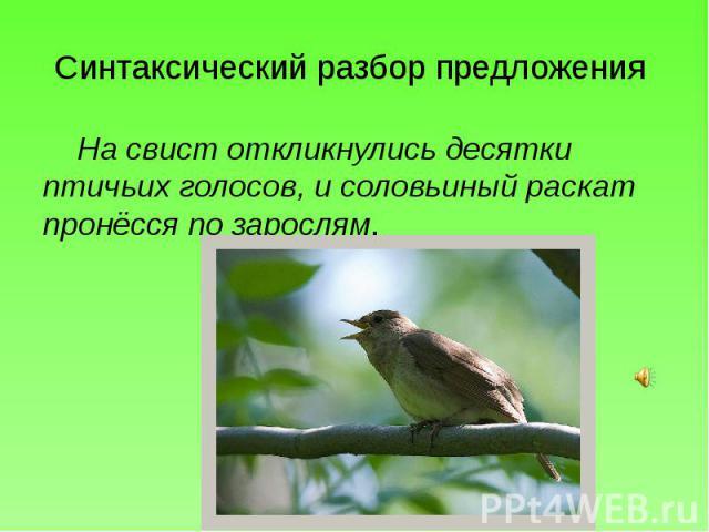 Синтаксический разбор предложения На свист откликнулись десятки птичьих голосов, и соловьиный раскат пронёсся по зарослям.