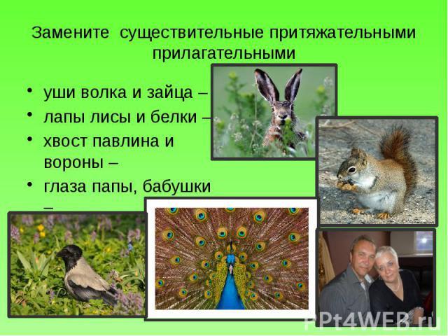 Замените существительные притяжательными прилагательными уши волка и зайца – лапы лисы и белки – хвост павлина и вороны – глаза папы, бабушки –