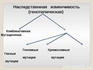 Наследственная изменчивость (генотипическая) Комбинативная Мутационная Геномные