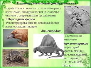 Палеонтологические доказательства Изучаются ископаемые остатки вымерших организм