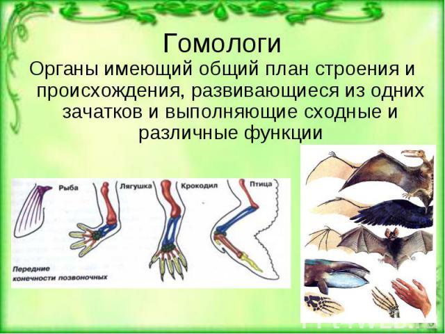 Гомологи Органы имеющий общий план строения и происхождения, развивающиеся из одних зачатков и выполняющие сходные и различные функции