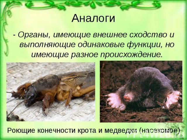 Аналоги - Органы, имеющие внешнее сходство и выполняющие одинаковые функции, но имеющие разное происхождение.Роющие конечности крота и медведки (насекомое)