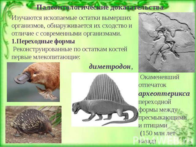 Палеонтологические доказательства Изучаются ископаемые остатки вымерших организмов, обнаруживается их сходство и отличие с современными организмами. 1.Переходные формы Реконструированные по остаткам костей первые млекопитающие: Окаменевший отпечаток…