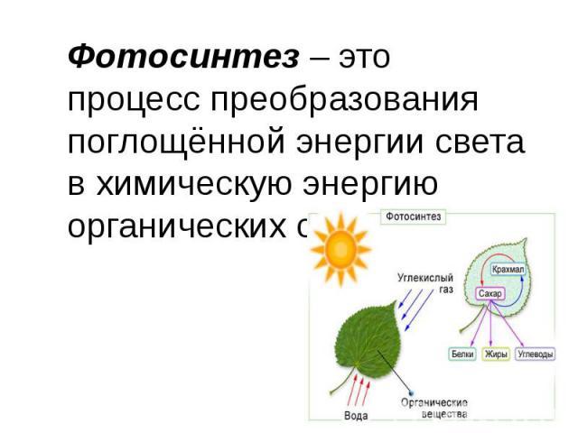 Фотосинтез– это процесс преобразования поглощённой энергии света в химическую энергию органических соединений.