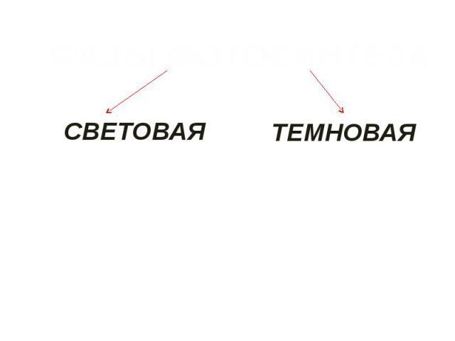 ФАЗЫ ФОТОСИНТЕЗАСВЕТОВАЯТЕМНОВАЯ