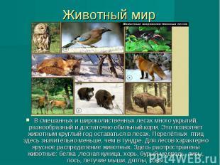 Животный мир В смешанных и широколиственных лесах много укрытий, разнообразный и