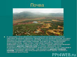 Почва В смешанных лесах умеренного пояса подзолистые почвы приобретают гумусовые