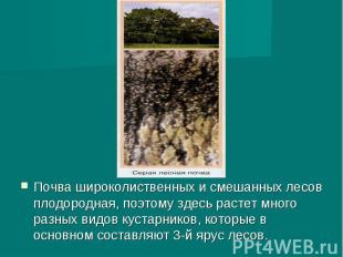 Почва широколиственных и смешанных лесов плодородная, поэтому здесь растет много