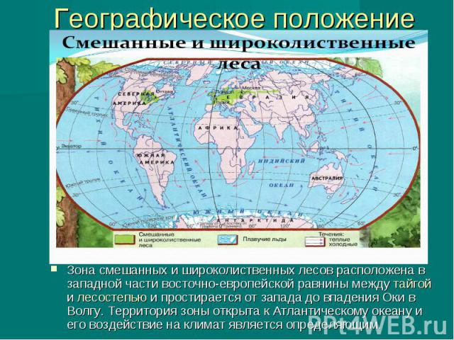 Географическое положение Зона смешанных и широколиственных лесов расположена в западной части восточно-европейской равнины между тайгой и лесостепью и простирается от запада до впадения Оки в Волгу. Территория зоны открыта к Атлантическому океану и …