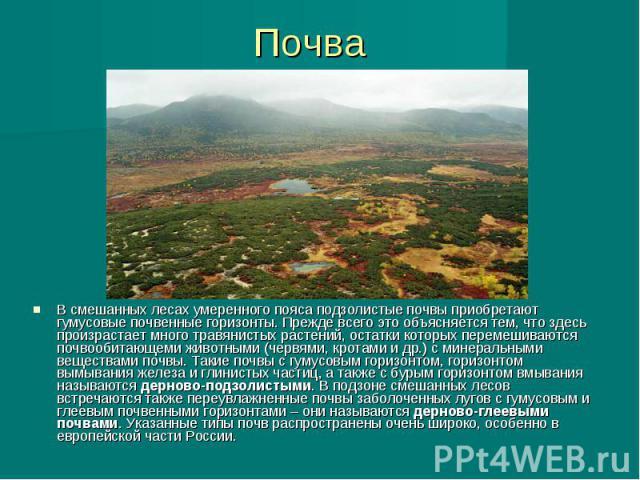 Почва В смешанных лесах умеренного пояса подзолистые почвы приобретают гумусовые почвенные горизонты. Прежде всего это объясняется тем, что здесь произрастает много травянистых растений, остатки которых перемешиваются почвообитающеми животными (черв…