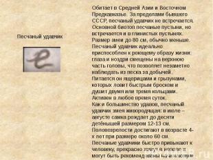 Обитает в Средней Азии и Восточном Предкавказье. За пределами бывшего СССР, песч