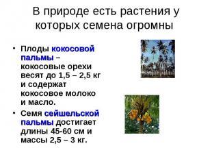 В природе есть растения у которых семена огромны Плоды кокосовой пальмы – кокосо