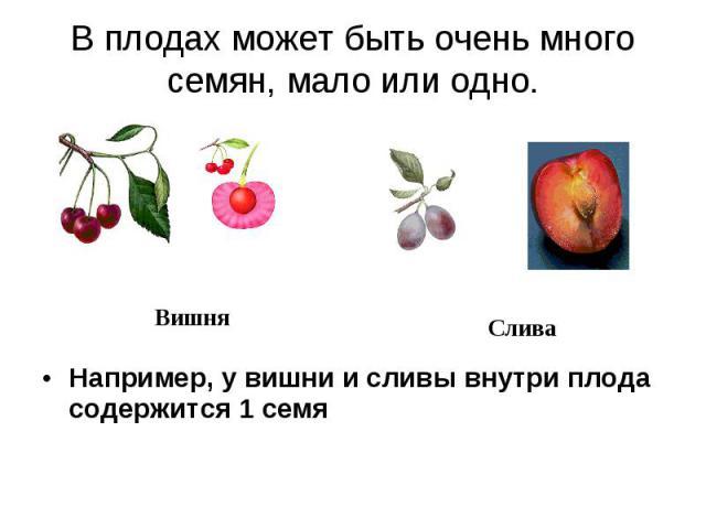 В плодах может быть очень много семян, мало или одно. Например, у вишни и сливы внутри плода содержится 1 семя