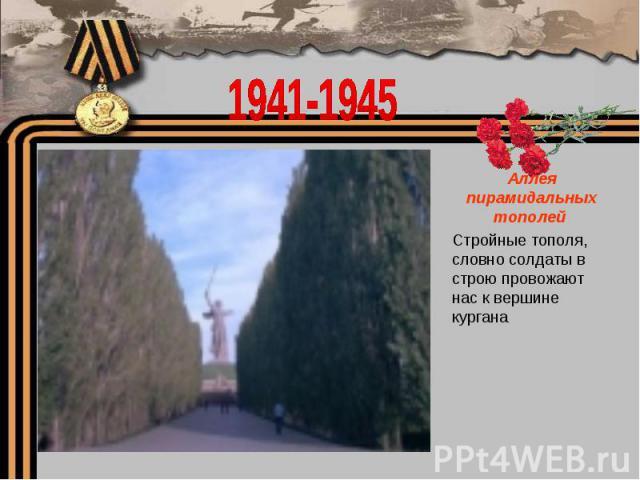 1941-1945Аллея пирамидальных тополей Стройные тополя, словно солдаты в строю провожают нас к вершине кургана