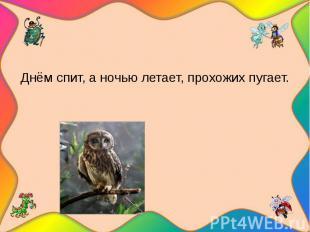 Днём спит, а ночью летает, прохожих пугает.