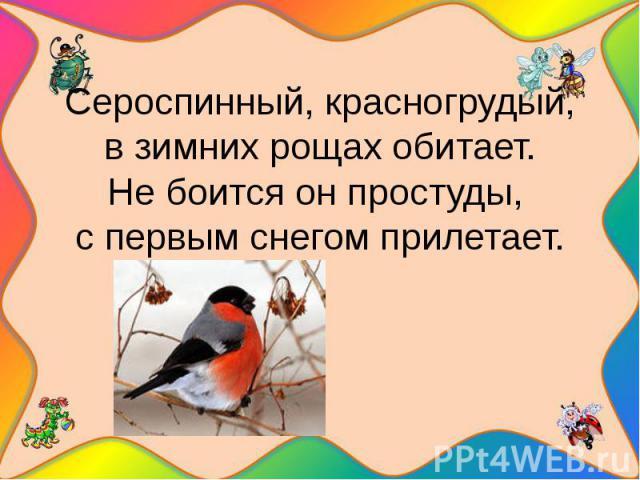 Сероспинный, красногрудый,в зимних рощах обитает.Не боится он простуды, с первым снегом прилетает.