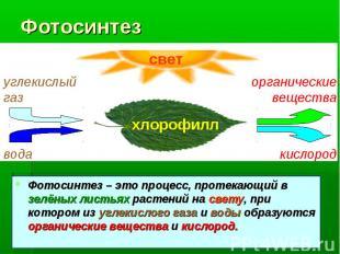 Фотосинтез Фотосинтез – это процесс, протекающий в зелёных листьях растений на с