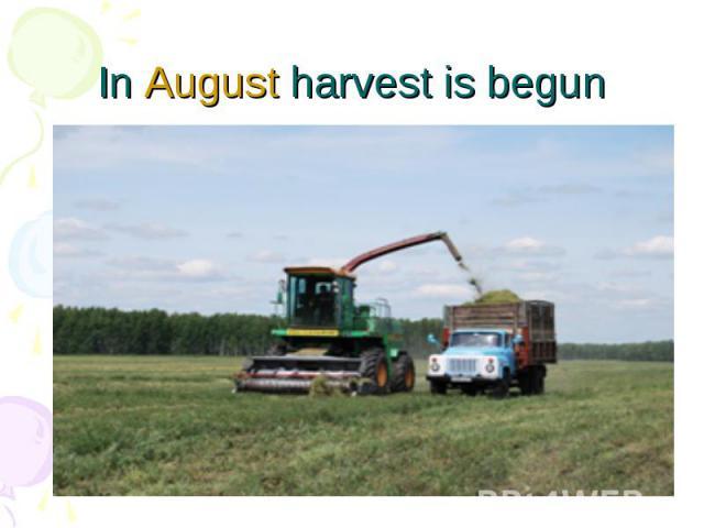In August harvest is begun
