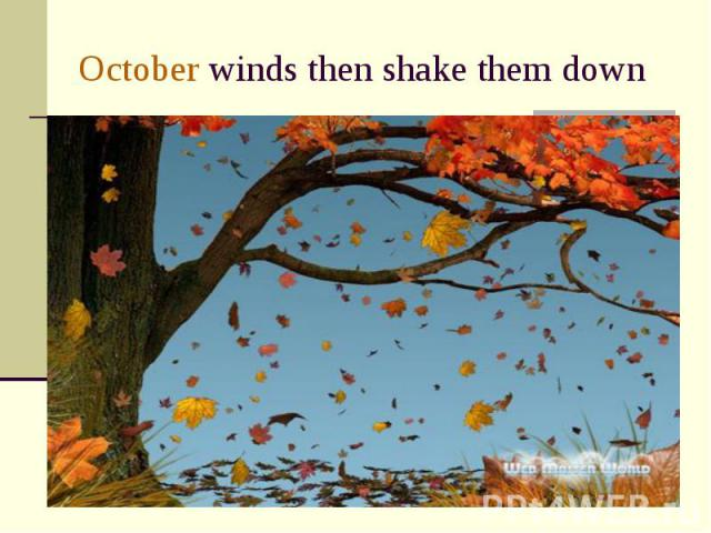 October winds then shake them down