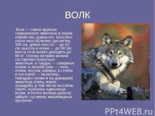 ВОЛК Волк — самое крупное современное животное в своём семействе: длина его тела