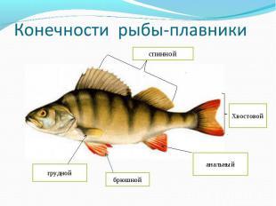 Конечности рыбы-плавники