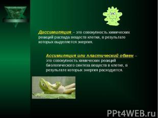 Диссимиляция – это совокупность химических реакций распада веществ клетки, в рез