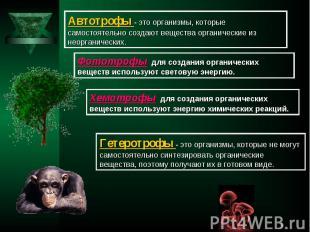 Автотрофы - это организмы, которые самостоятельно создают вещества органические