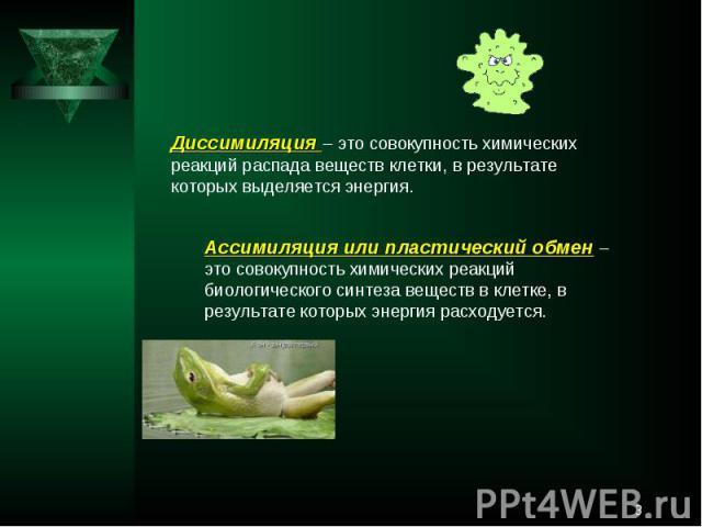 Диссимиляция – это совокупность химических реакций распада веществ клетки, в результате которых выделяется энергия.Ассимиляция или пластический обмен – это совокупность химических реакций биологического синтеза веществ в клетке, в результате которых…