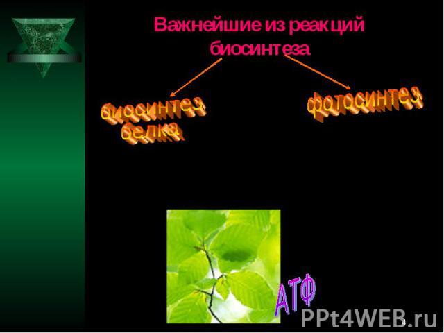 Важнейшие из реакций биосинтезабиосинтез белкафотосинтез