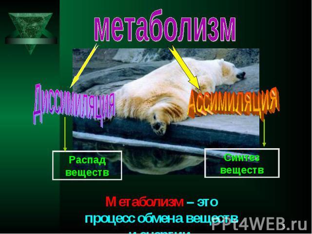 метаболизмДиссимиляцияАссимиляция