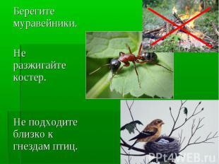 Берегите муравейники.Не разжигайте костер. Не подходите близко к гнездам птиц.