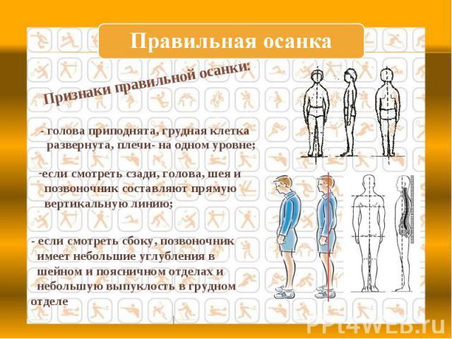 Правильная осанка Признаки правильной осанки: - голова приподнята, грудная клетка развернута, плечи- на одном уровне; если смотреть сзади, голова, шея и позвоночник составляют прямую вертикальную линию;- если смотреть сбоку, позвоночник имеет неболь…