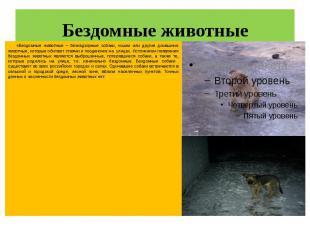 Бездомные животные «Бездомные животные – безнадзорные собаки, кошки или другие д