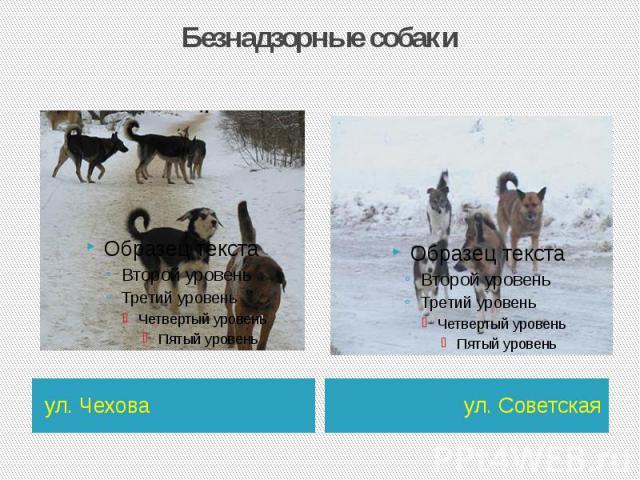 Безнадзорные собаки ул. Чехова