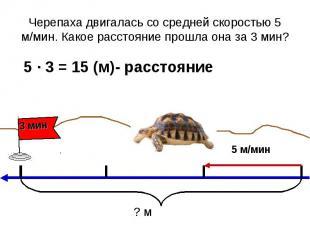 Черепаха двигалась со средней скоростью 5 м/мин. Какое расстояние прошла она за