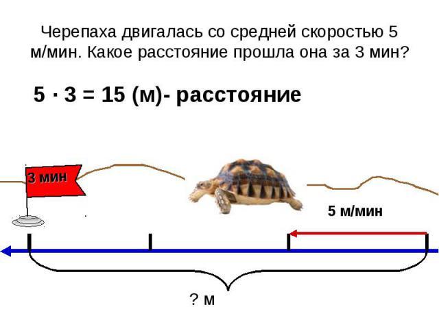 Черепаха двигалась со средней скоростью 5 м/мин. Какое расстояние прошла она за 3 мин? 5 ∙ 3 = 15 (м)- расстояние