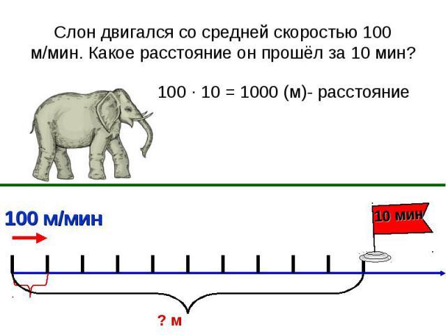 Слон двигался со средней скоростью 100 м/мин. Какое расстояние он прошёл за 10 мин? 100 ∙ 10 = 1000 (м)- расстояние