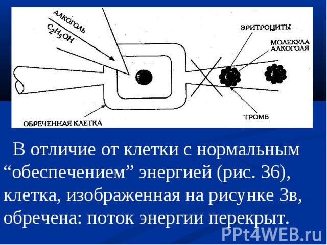 """В отличие от клетки с нормальным """"обеспечением"""" энергией (рис. 36), клетка, изображенная на рисунке Зв, обречена: поток энергии перекрыт."""