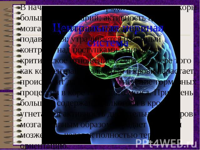 В начале опьянения страдают структуры коры больших полушарий; активность центров мозга, управляющих поведением, подавляется: утрачивается разумный контроль над поступками, снижается критическое отношение к себе. По мере того как концентрация алкогол…
