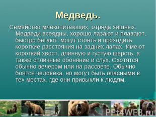 Медведь. Семейство млекопитающих, отряда хищных. Медведи всеядны, хорошо лазают