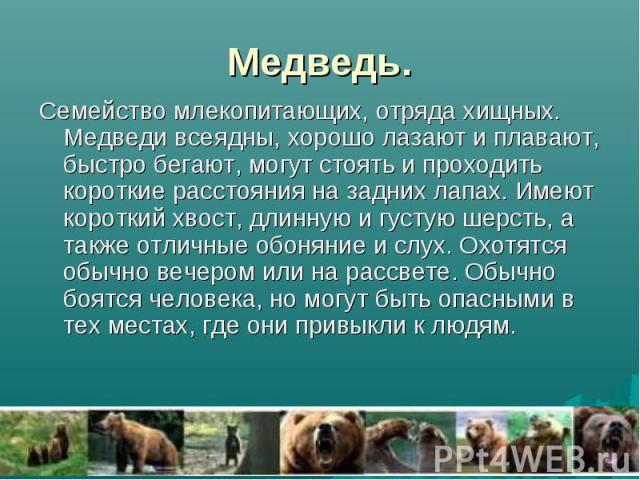 Медведь. Семейство млекопитающих, отряда хищных. Медведи всеядны, хорошо лазают и плавают, быстро бегают, могут стоять и проходить короткие расстояния на задних лапах. Имеют короткий хвост, длинную и густую шерсть, а также отличные обоняние и слух. …