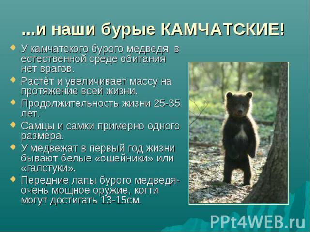 ...и наши бурые КАМЧАТСКИЕ! У камчатского бурого медведя в естественной среде обитания нет врагов.Растёт и увеличивает массу на протяжение всей жизни.Продолжительность жизни 25-35 лет.Самцы и самки примерно одного размера.У медвежат в первый год жиз…