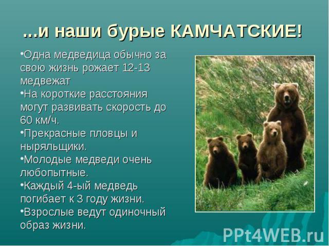 ...и наши бурые КАМЧАТСКИЕ! Одна медведица обычно за свою жизнь рожает 12-13 медвежатНа короткие расстояния могут развивать скорость до 60 км/ч.Прекрасные пловцы и ныряльщики.Молодые медведи очень любопытные.Каждый 4-ый медведь погибает к 3 году жиз…