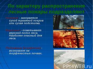 По характеру распространения лесные пожары подразделяют Низовые - загорается сух