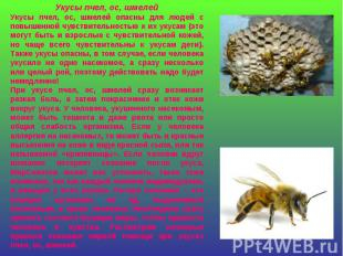 Укусы пчел, ос, шмелейУкусы пчел, ос, шмелей опасны для людей с повышенной чувст