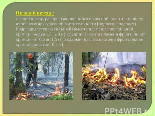 Низовой пожар : Лесной пожар, распространяющийся по лесной подстилке, опаду и ни