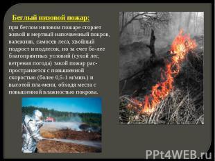 Беглый низовой пожар: при беглом низовом пожаре сгорает живой и мертвый напочвен