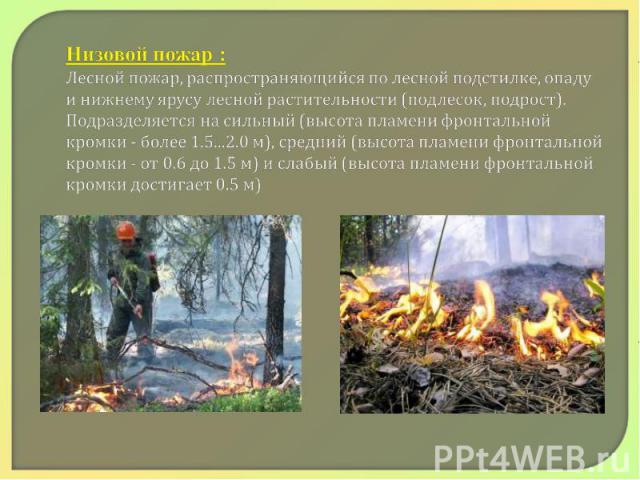 Низовой пожар : Лесной пожар, распространяющийся по лесной подстилке, опаду и нижнему ярусу лесной растительности (подлесок, подрост). Подразделяется на сильный (высота пламени фронтальной кромки - более 1.5...2.0 м), средний (высота пламени фронтал…
