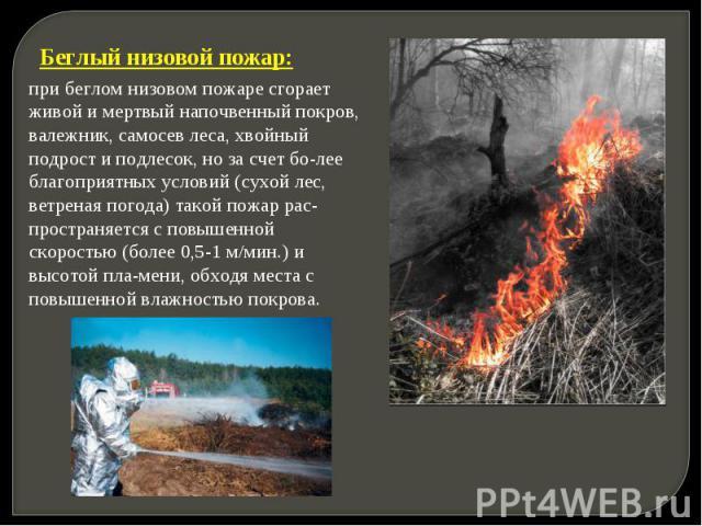 Беглый низовой пожар: при беглом низовом пожаре сгорает живой и мертвый напочвенный покров, валежник, самосев леса, хвойный подрост и подлесок, но за счет более благоприятных условий (сухой лес, ветреная погода) такой пожар распространяется с повыше…