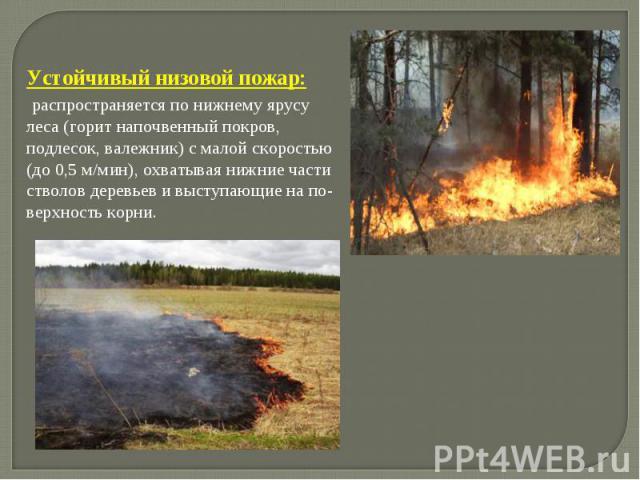 Устойчивый низовой пожар: распространяется по нижнему ярусу леса (горит напочвенный покров, подлесок, валежник) с малой скоростью (до 0,5 м/мин), охватывая нижние части стволов деревьев и выступающие на поверхность корни.